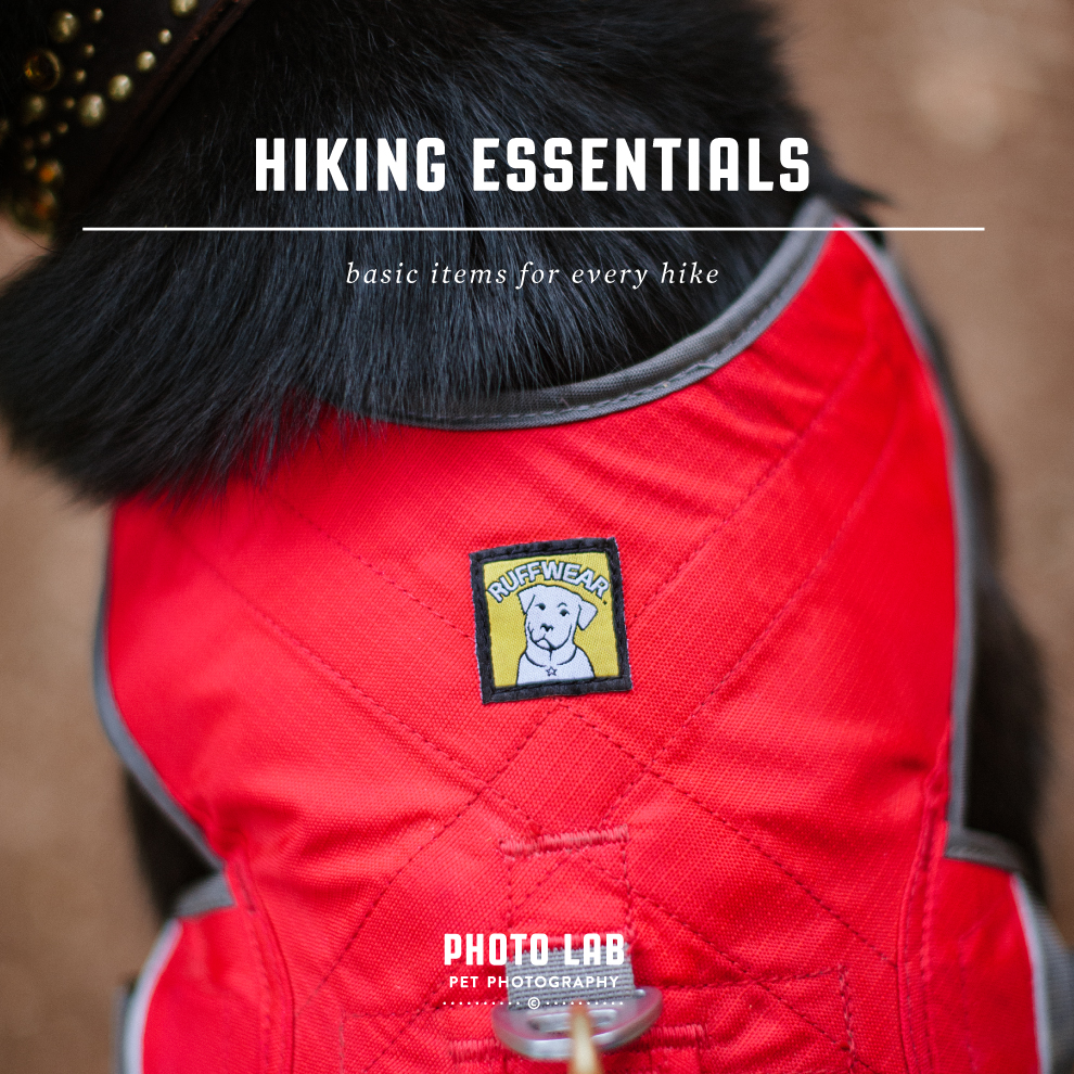 Hiking Basics – What's in My Backpack?