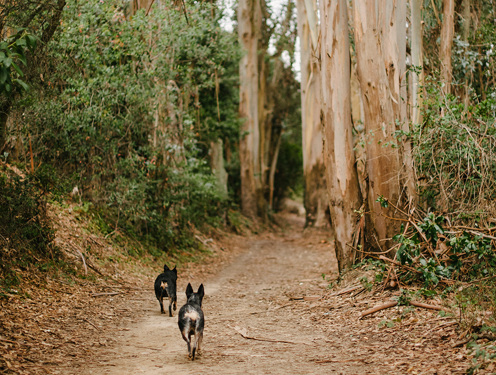 Redwood Hikes Dog Friendly