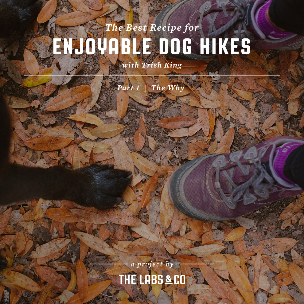 The best recipe for enjoyable dog hikes
