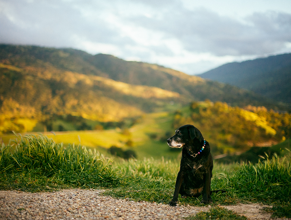 Del Valle Regional Park (hike 9) - 365 Dog Hikes
